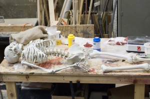 The full skeleton laid out on a table