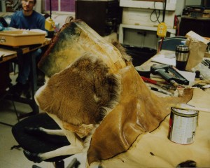 Attaching the deer hide