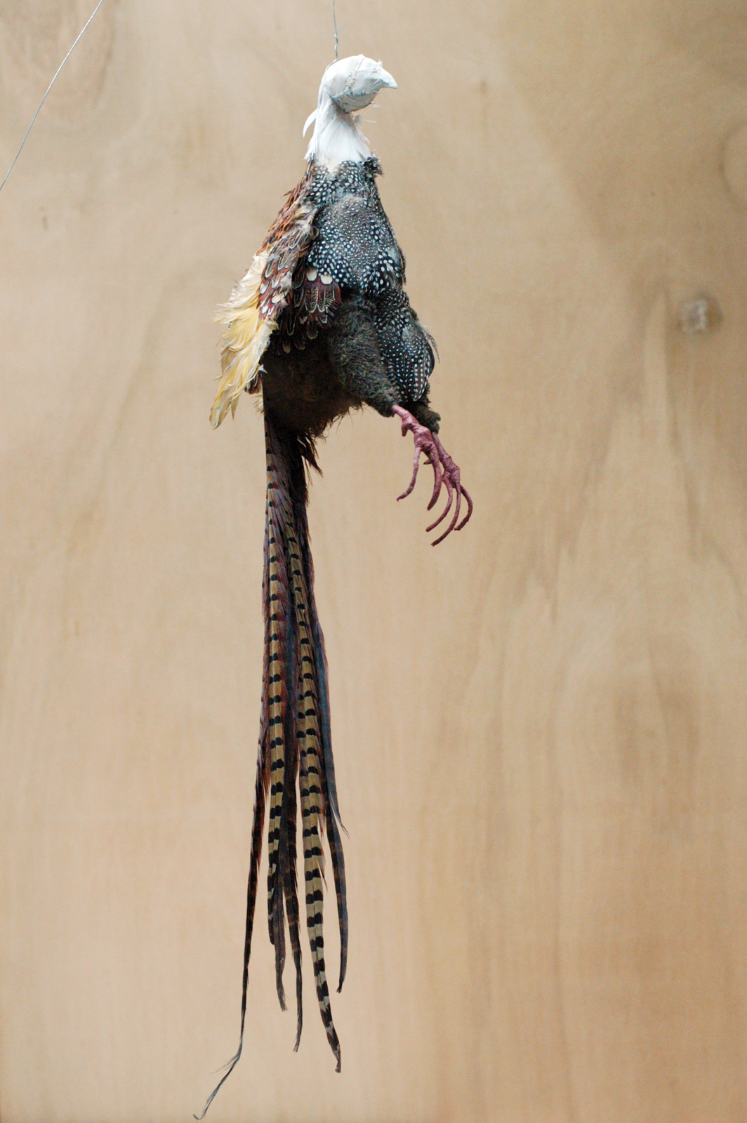 Full-length pheasant near completion
